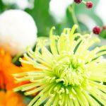 WEEKEND FLOWER から9月秋のお花が届いた♪